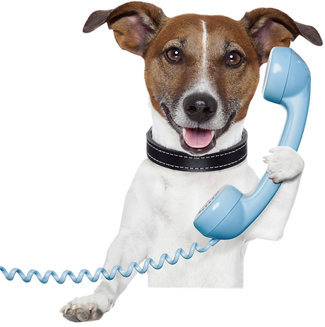 dog on phone.png