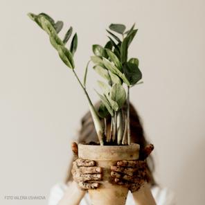 Plantas que nos cuidam dentro de Casa