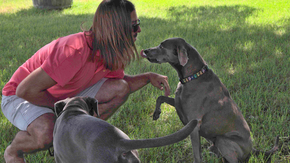 NEW DOGS OF THE WEEK! Elway and Blueberry, Ron Yates Wines