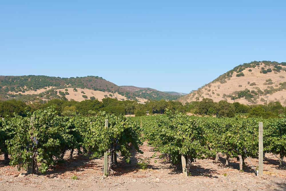 Game Farm Vineyard