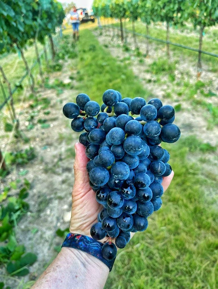 Texas Heritage Vineyard