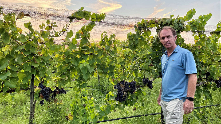 TEXAS GRAPE HARVEST 2021: SOME TOUGH SPOTS FOR YIELD BUT HIGH QUALITY