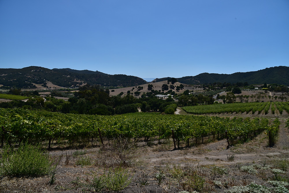 Bassi Ranch Vineyard, San Luis Obispo, CA