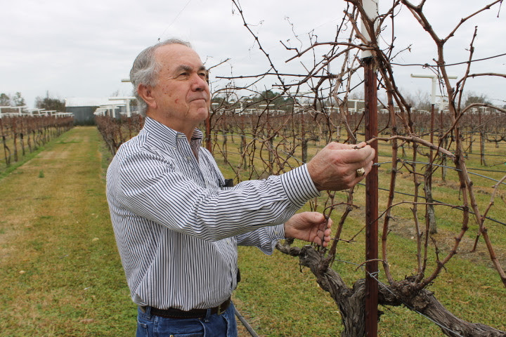 Raymond Haak in his Vineyard