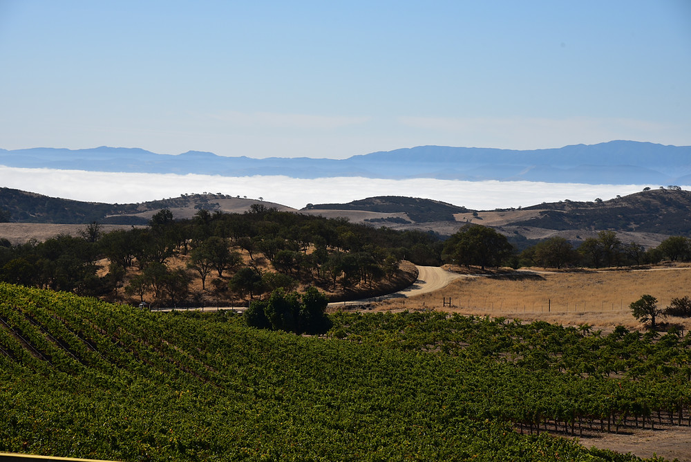 View from Chalone Winery down the Gavilan Mountains