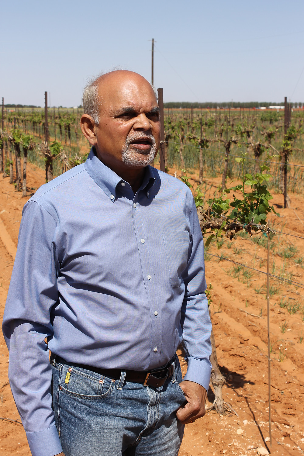 The Man: Vijay Reddy in his vineyards in Brownfield. The family are the second-largest Texas wine grape grower.