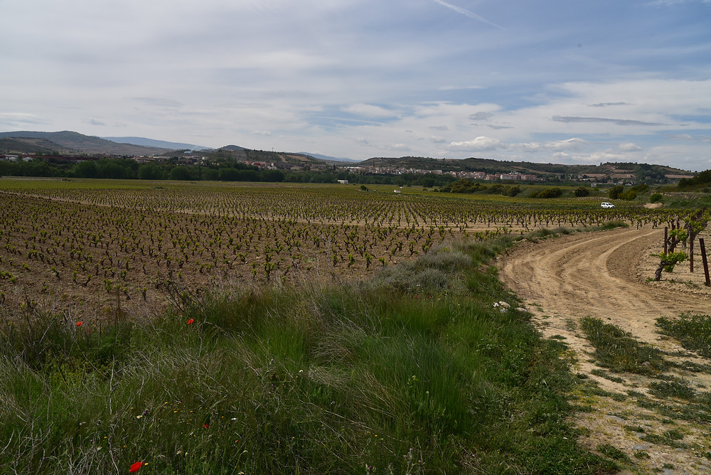 The same vineyards from the other side. Looking towards the Ebro river we see a dramatic transition in the soil from sand to sandy clay.