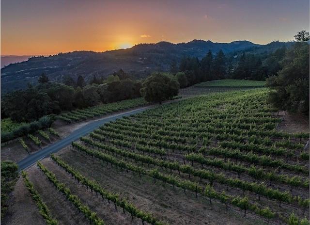 Lail Vineyards estate vineyard