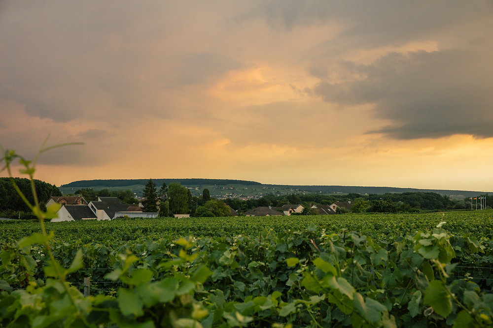 Some of the vineyards used by Champagne Ayala