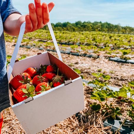 Berry Fun: Local PYO Fields
