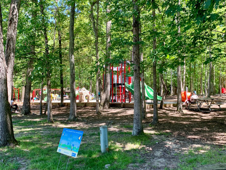 Summer Parks: Where can We find Shade?