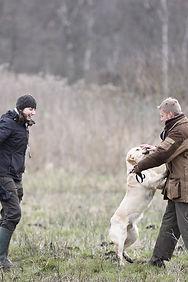 leçon chasse retriever