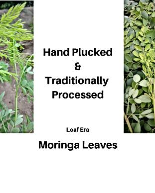 Hand Plucked Moringa Leaves by Leaf Era