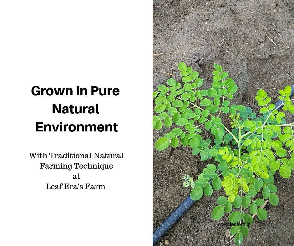 Moringa Natural Farming by Leaf Era web_