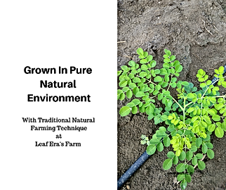 Moringa Natural Farming by Leaf Era web_