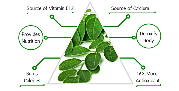 Moringa Benefits Leaf Era