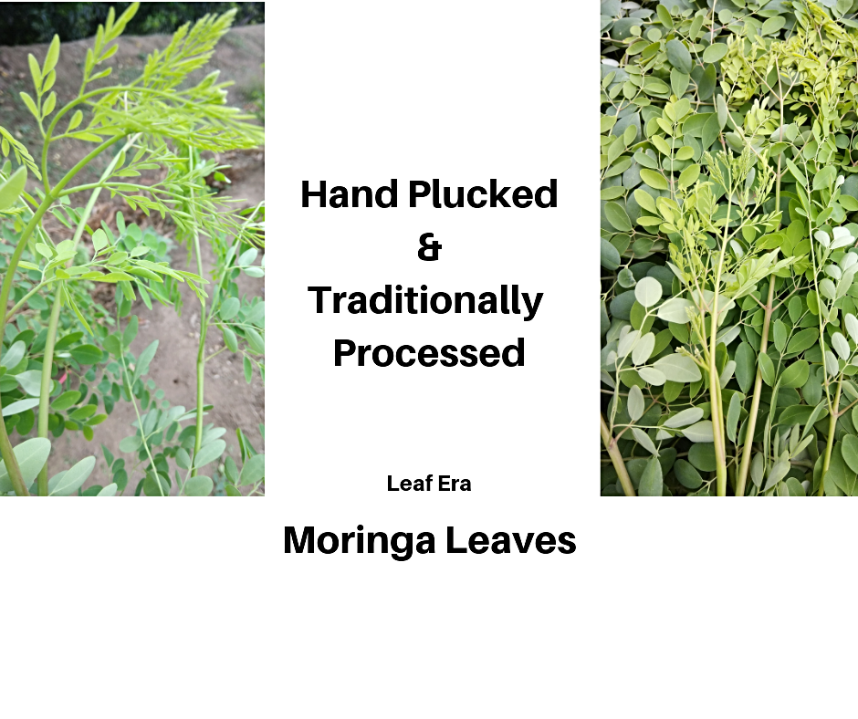 Hand Plucked Moringa Leaves by Leaf Era