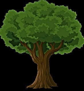 Moringa Tree Leaf Era