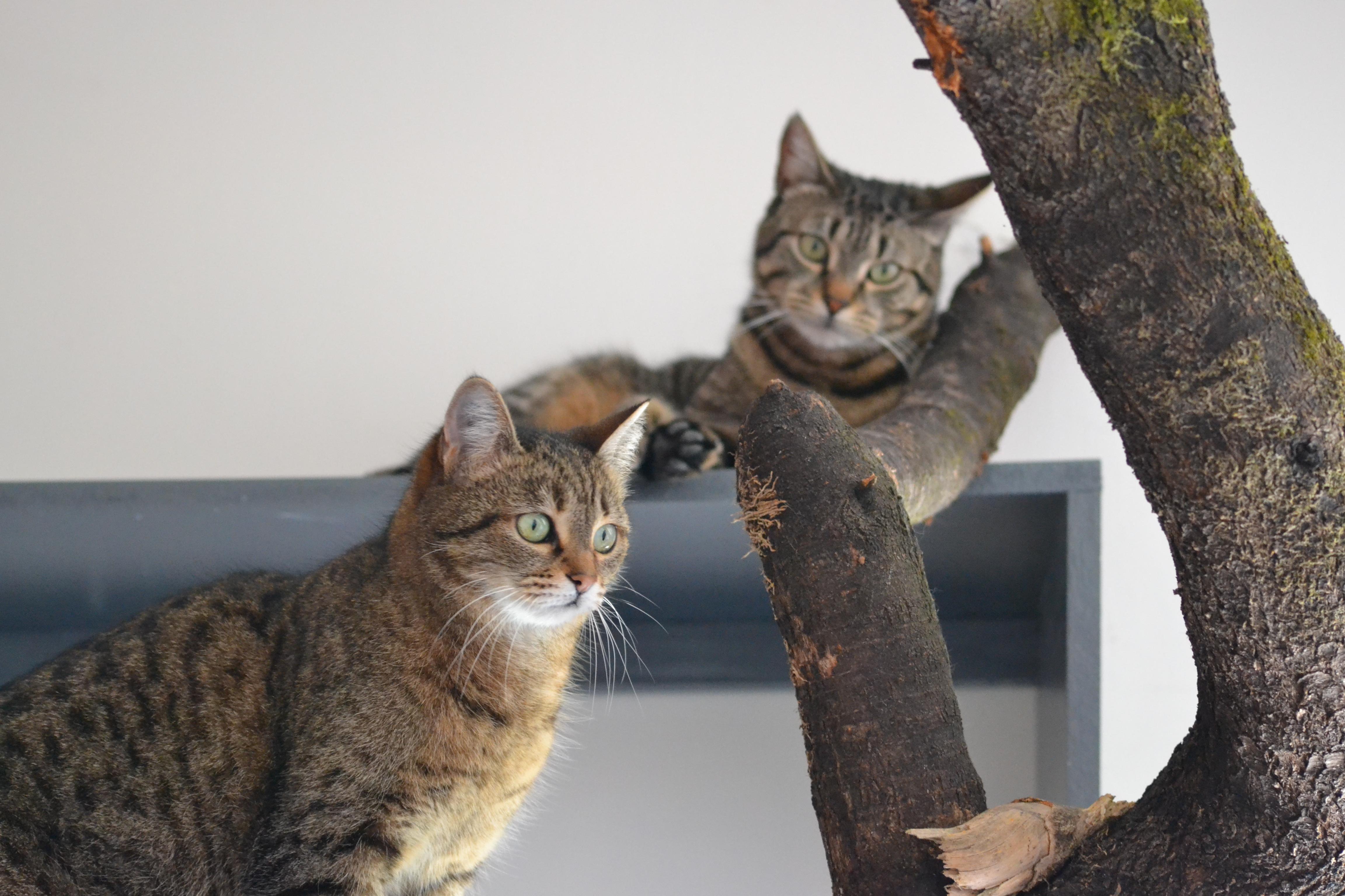 Féroce_et_Lolotte_dans_l'arbre