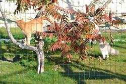 Mochi et Harry dans l'arbre