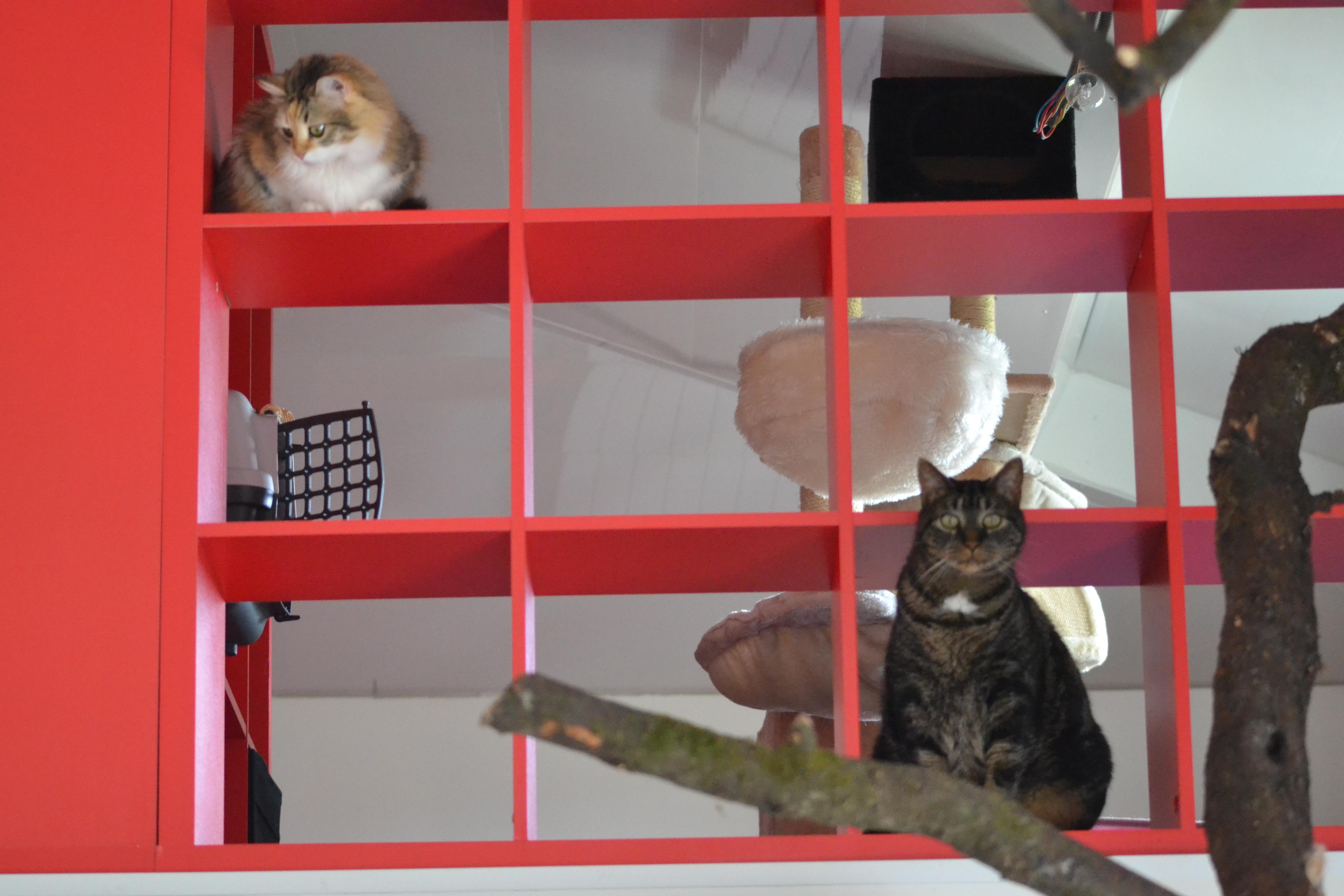 Lili et Cachou m'observent