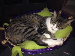chaton qui dort bien
