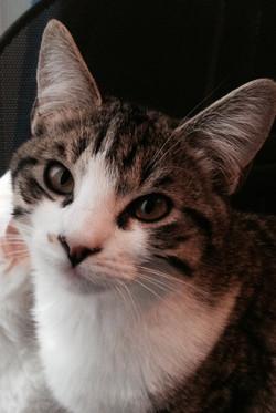 un beau portrait de chat