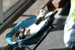 un chat qui se fait bronzer