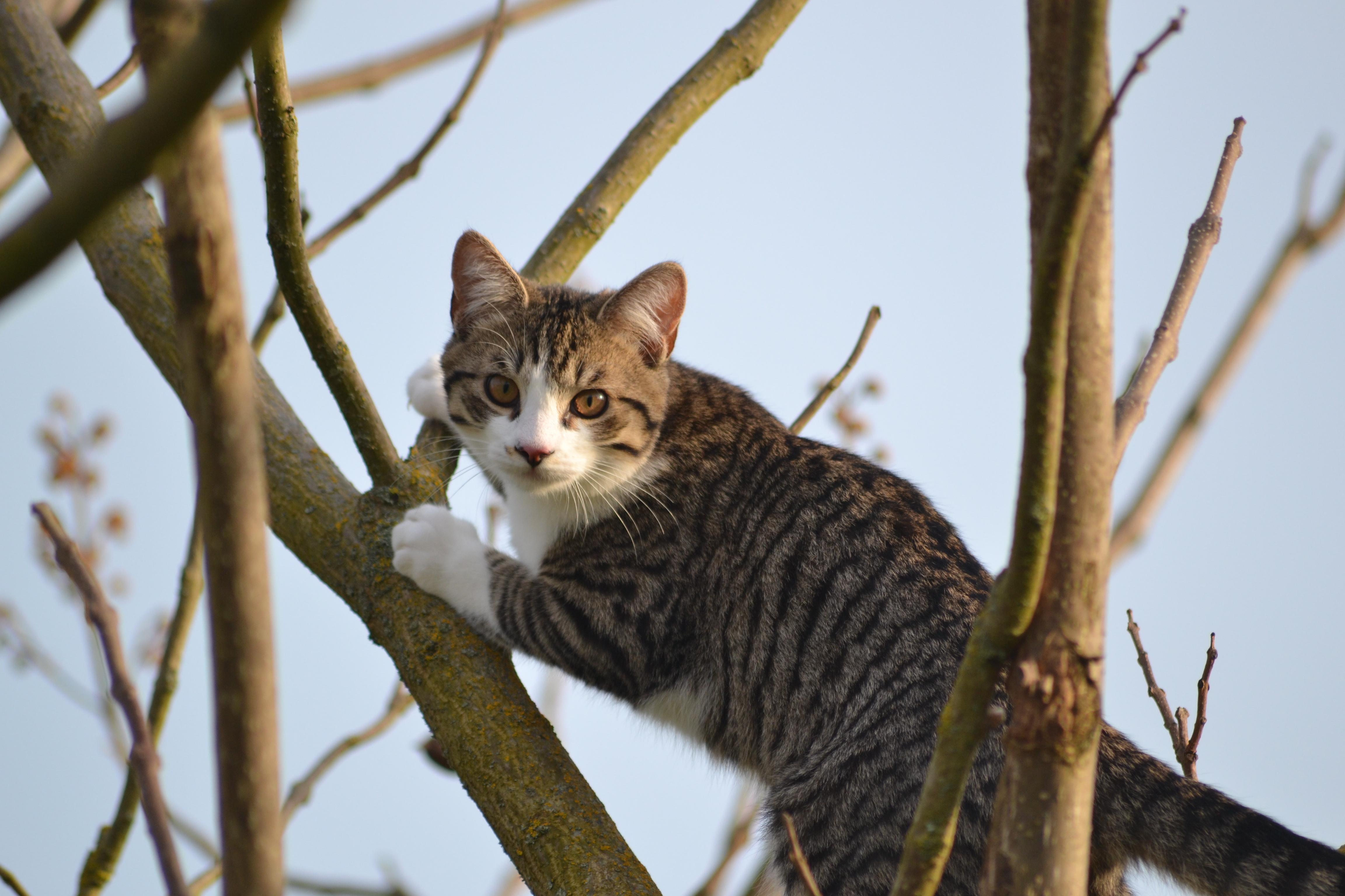 Un chat dans les arbres, c'est beau