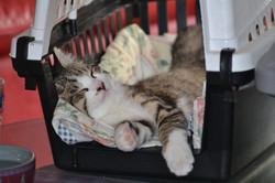 chat dort dans une cage de transport