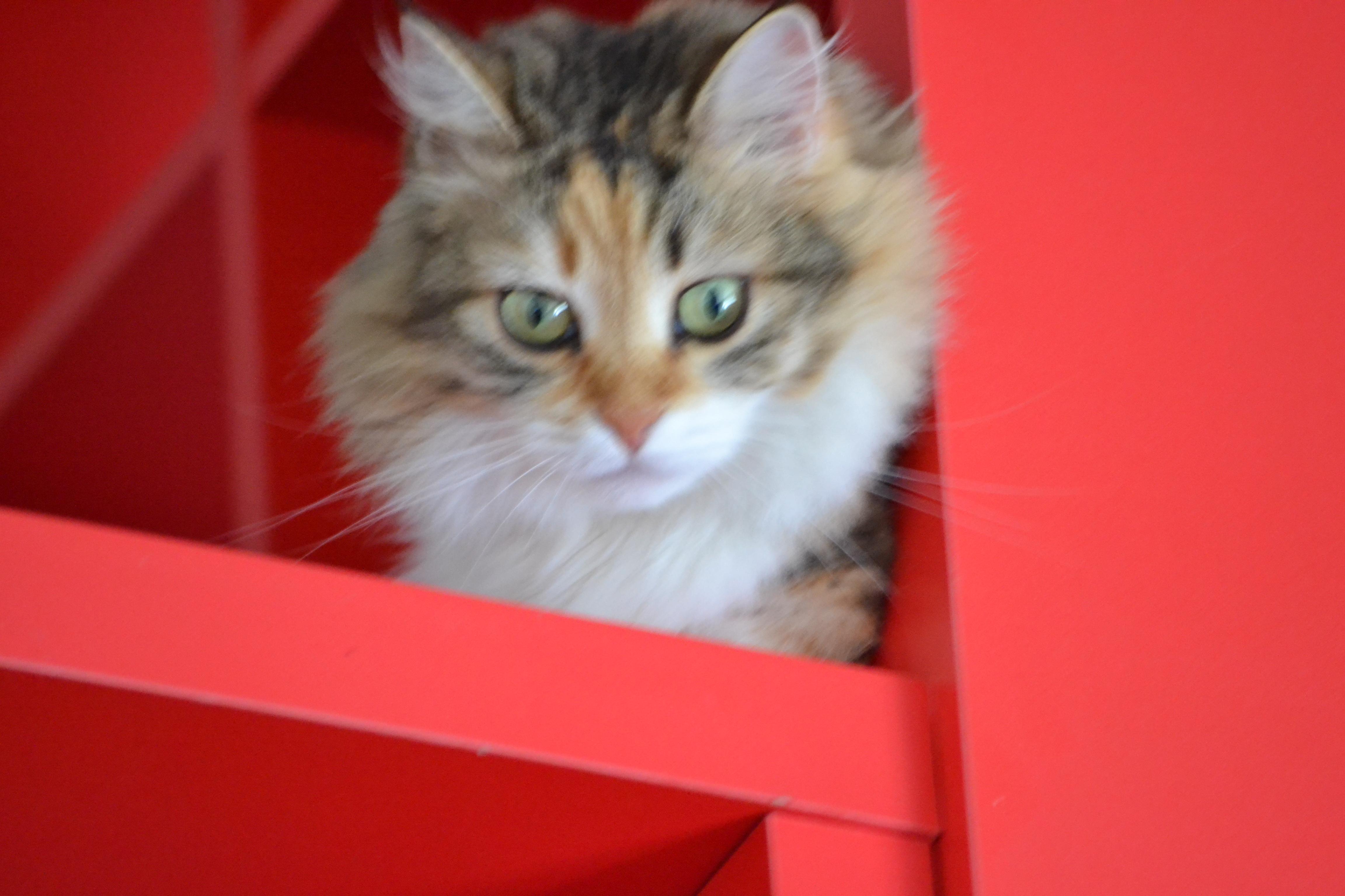 Lili surveille tout le monde...