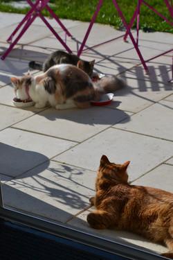 Gribouille, Mochi et Harry