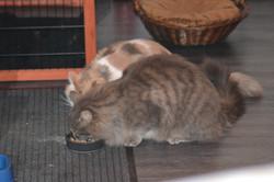 Mochi et Peluche qui mangent