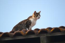 Le chat explorateur