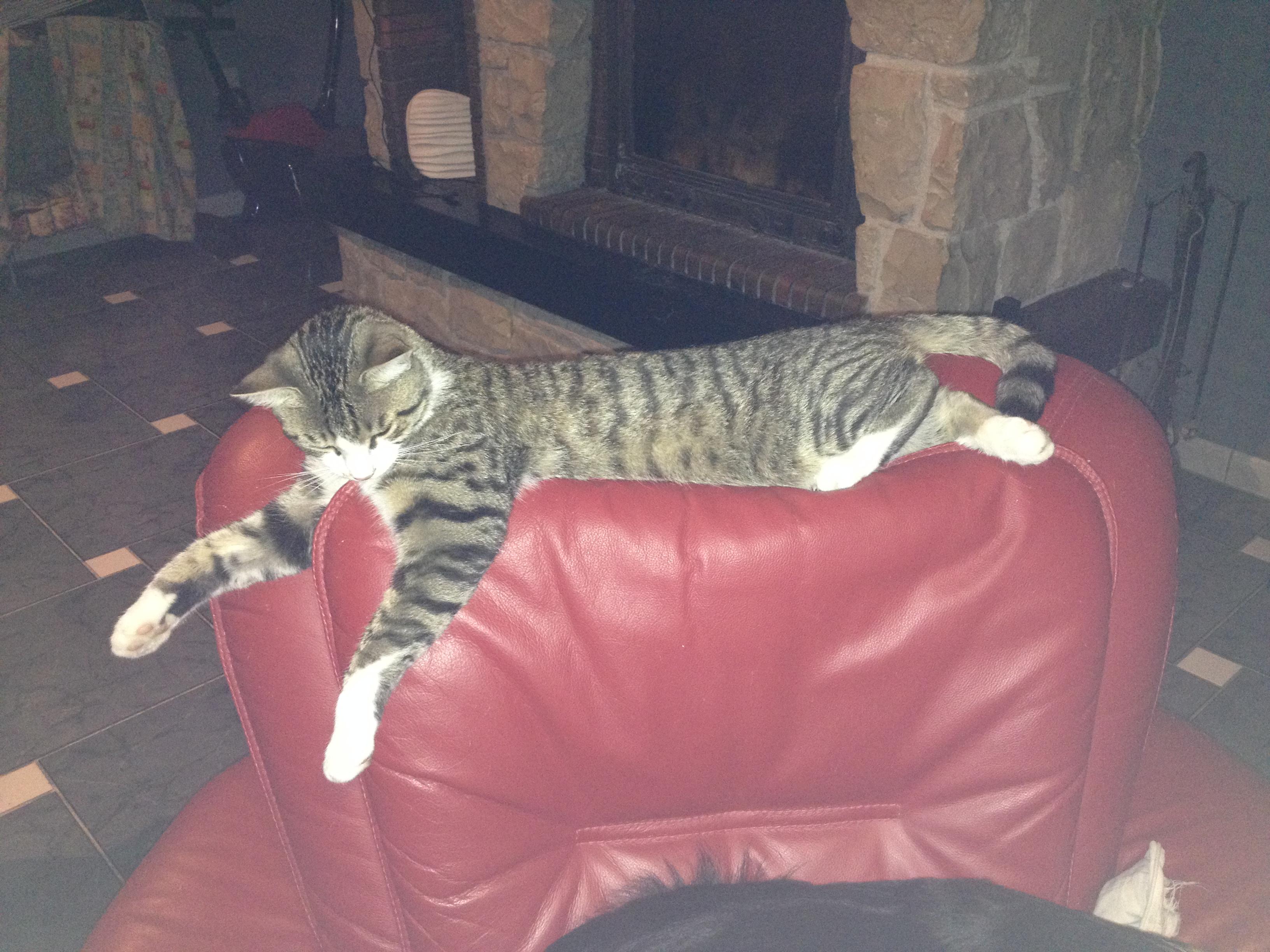 Tagada, un chat qui a besoin d'être