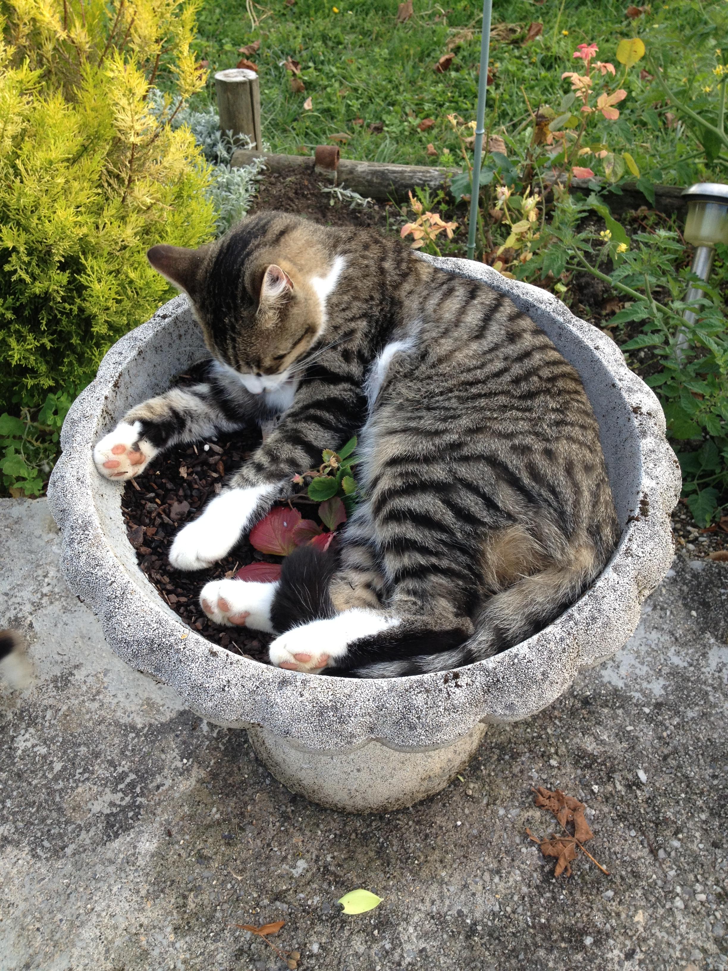 Un pot de fleur pour un chat