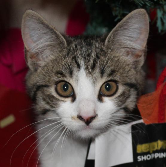 Pour le premier Noël de notre chaton