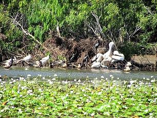 Keatings Lagoon, Cooktown