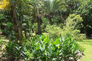 Cooktown's historic and beautiful Botanic Gardens