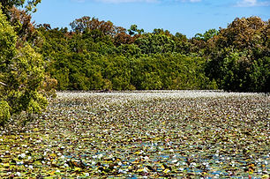Beautiful Keatings Lagoon and its birdlife lies 5 minutes out of Cooktown