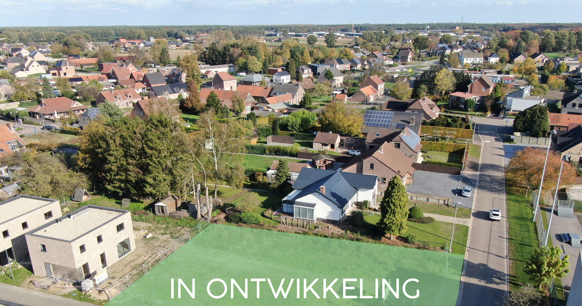 Goéland - Meeuwen