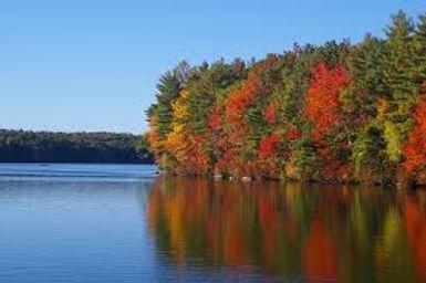 fall trees.jpg