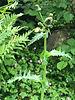 Die nächsten 15 Pflanzen (BASIS-MODUL)