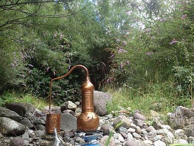Pflanzenwesen & Alchemie / Destillation eines Hydrolats (Weiterbildung)