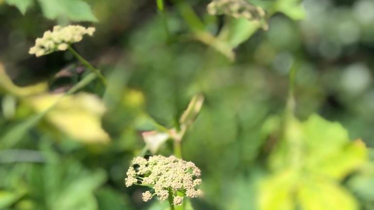 Pflanzenmythen & -Geschichten, hören & erzählen (WEITERBILDUNG)