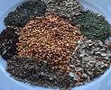 Wildpflanzen und Samen im Spätsommer, (BASIS-MODUL)