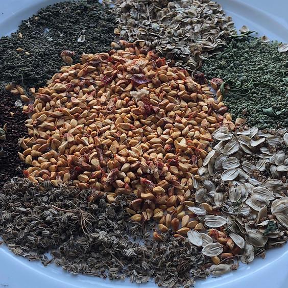 Wildpflanzen und Samen im Spätsommer (BASIS-MODUL)