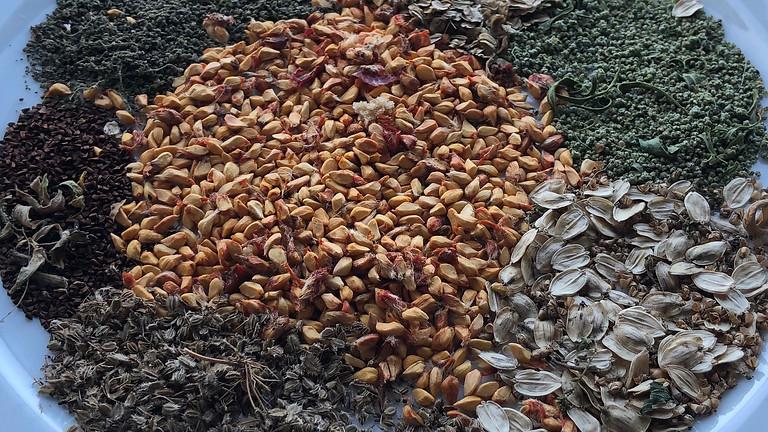 Wildpflanzen und Samen im Spätsommer (BASIS-MODUL) (AUSGEBUCHT)
