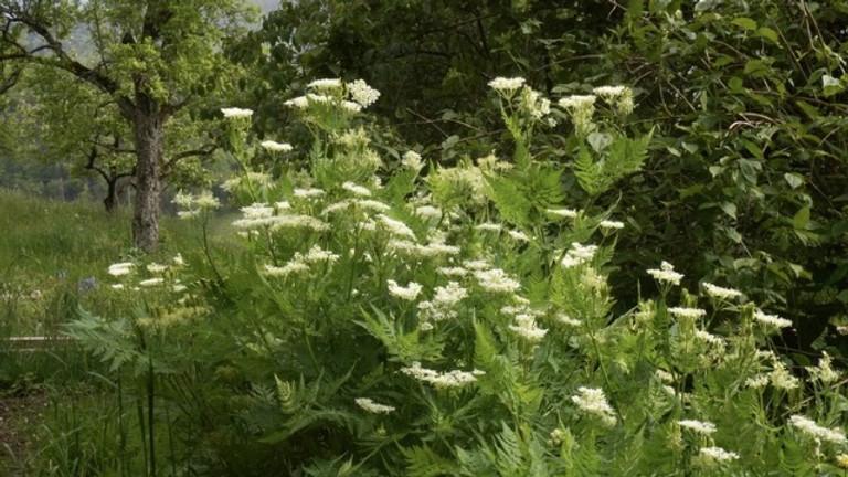 Kultivierung von Wildpflanzen 1: Lebensräume von Wildpflanzen (Weiterbildung)