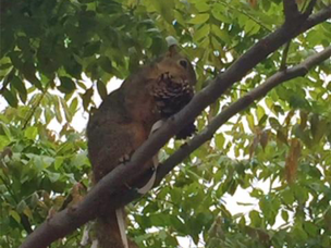 Sneaky Squirrel / Hungry Squirrel
